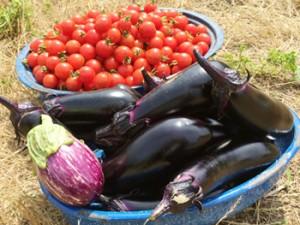 畑ごはん なすとトマト